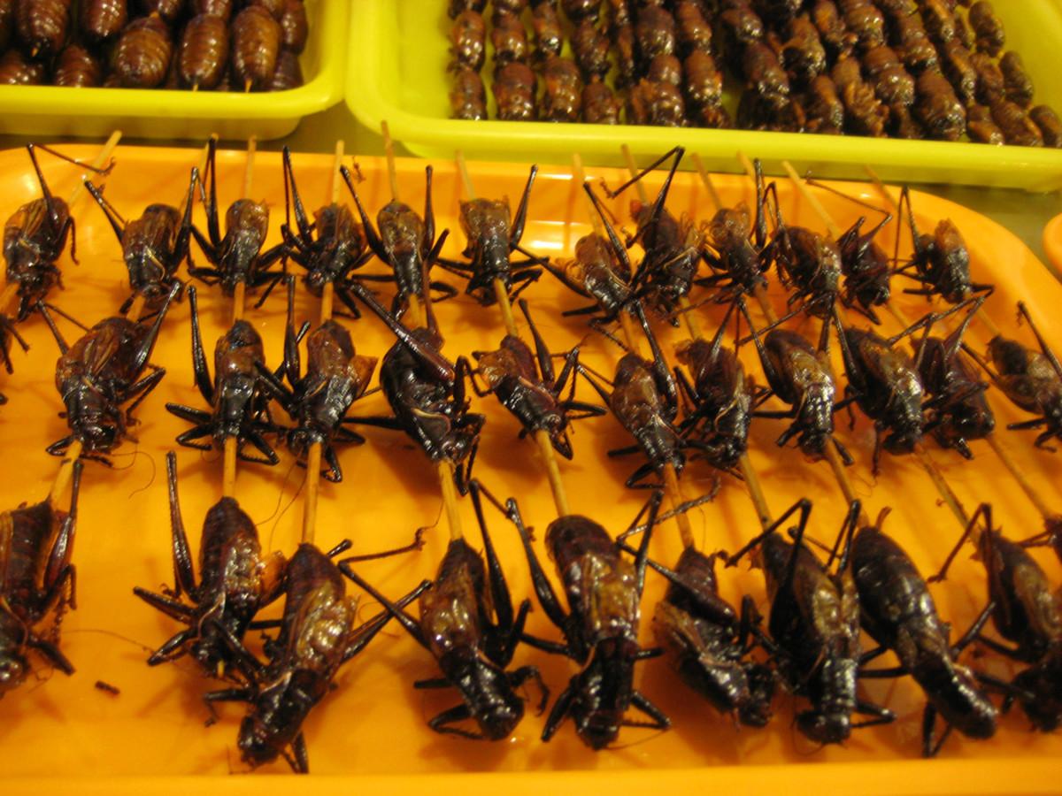 Fried Crickets on a Stick.