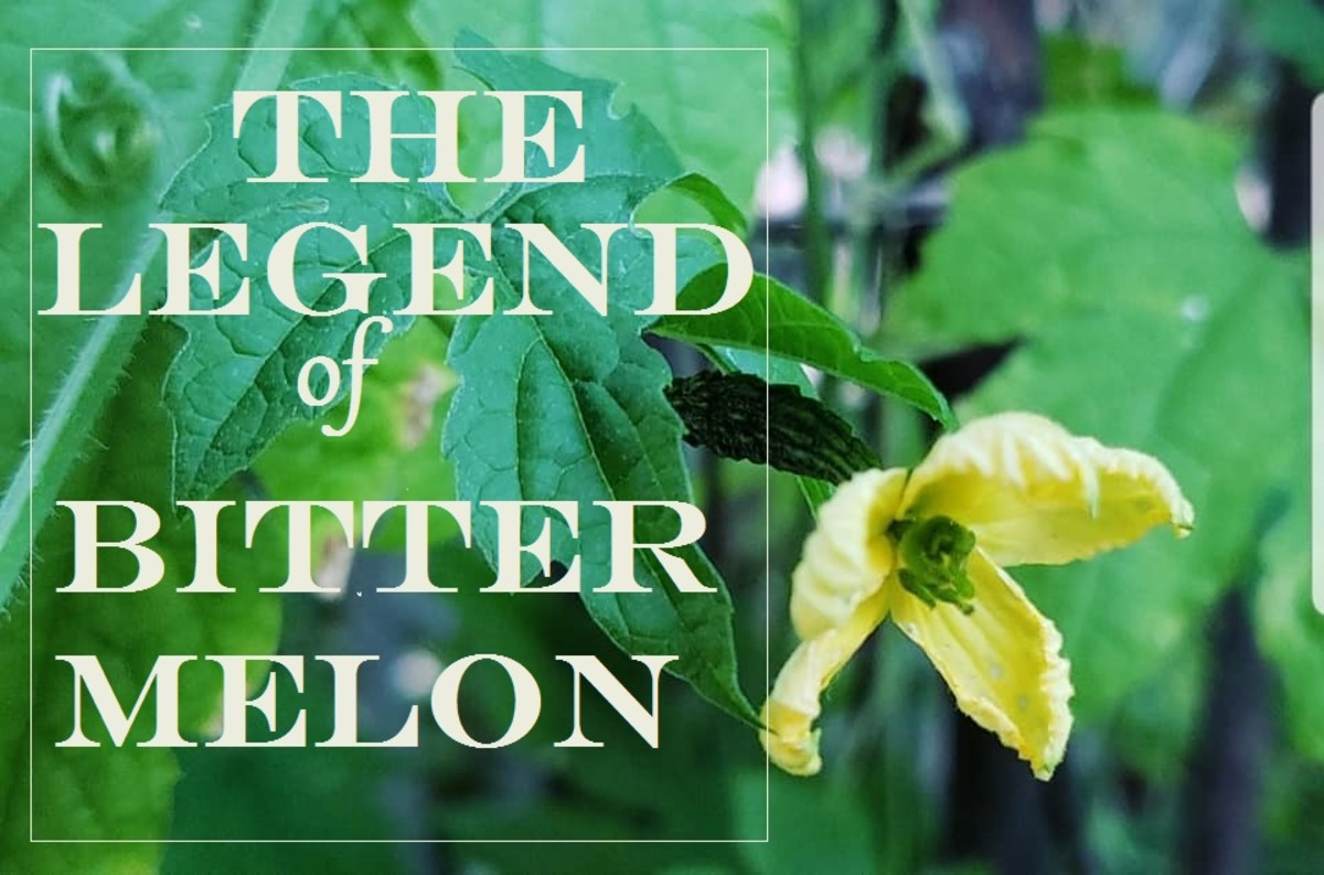 Why bitter melon tastes bitter?