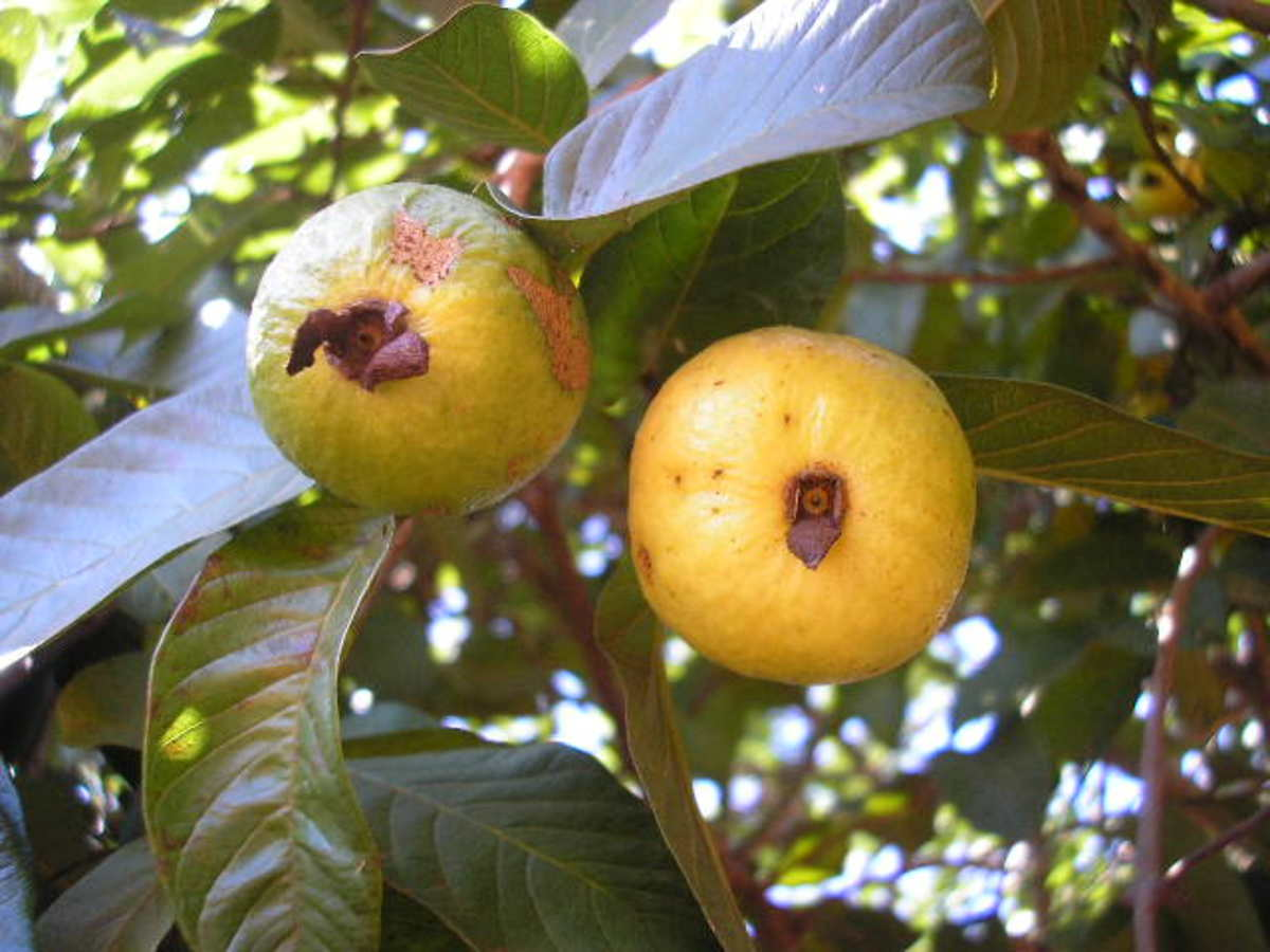 some-natural-home-remedies-for-cough