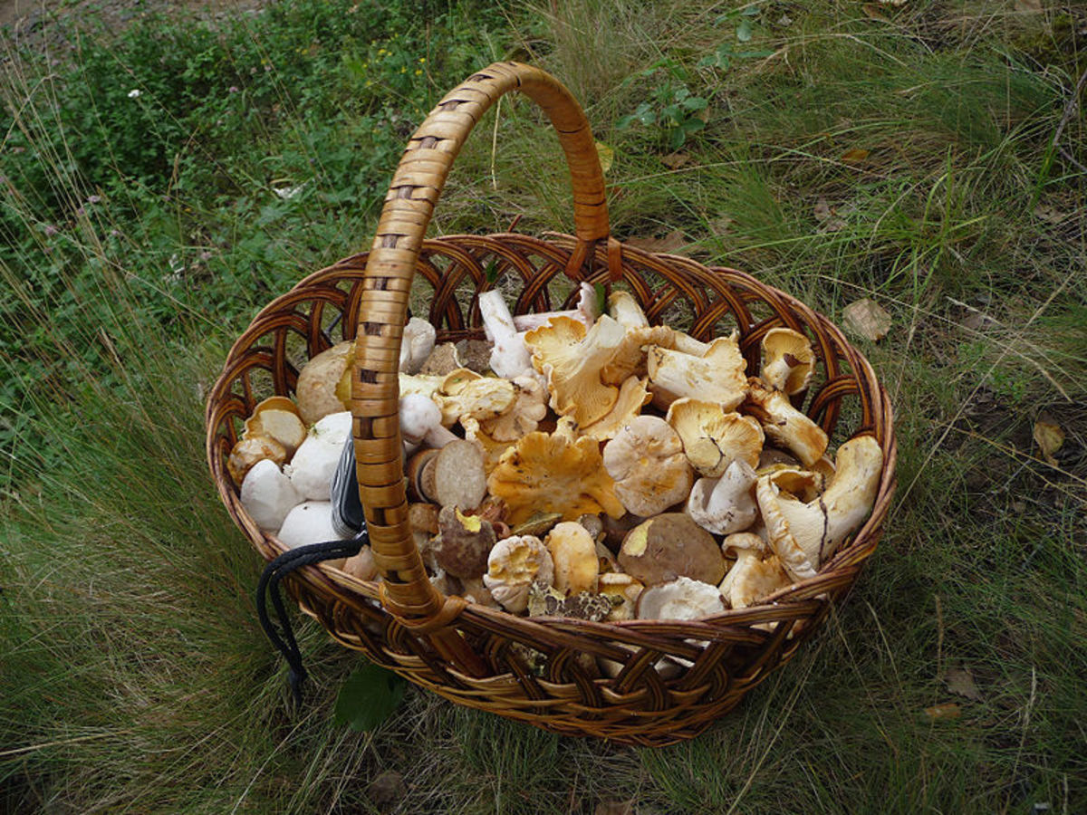 An assortment of mushrooms.