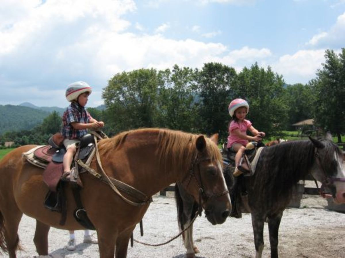 Camp activities for kids might include horse riding lessons and trail rides.