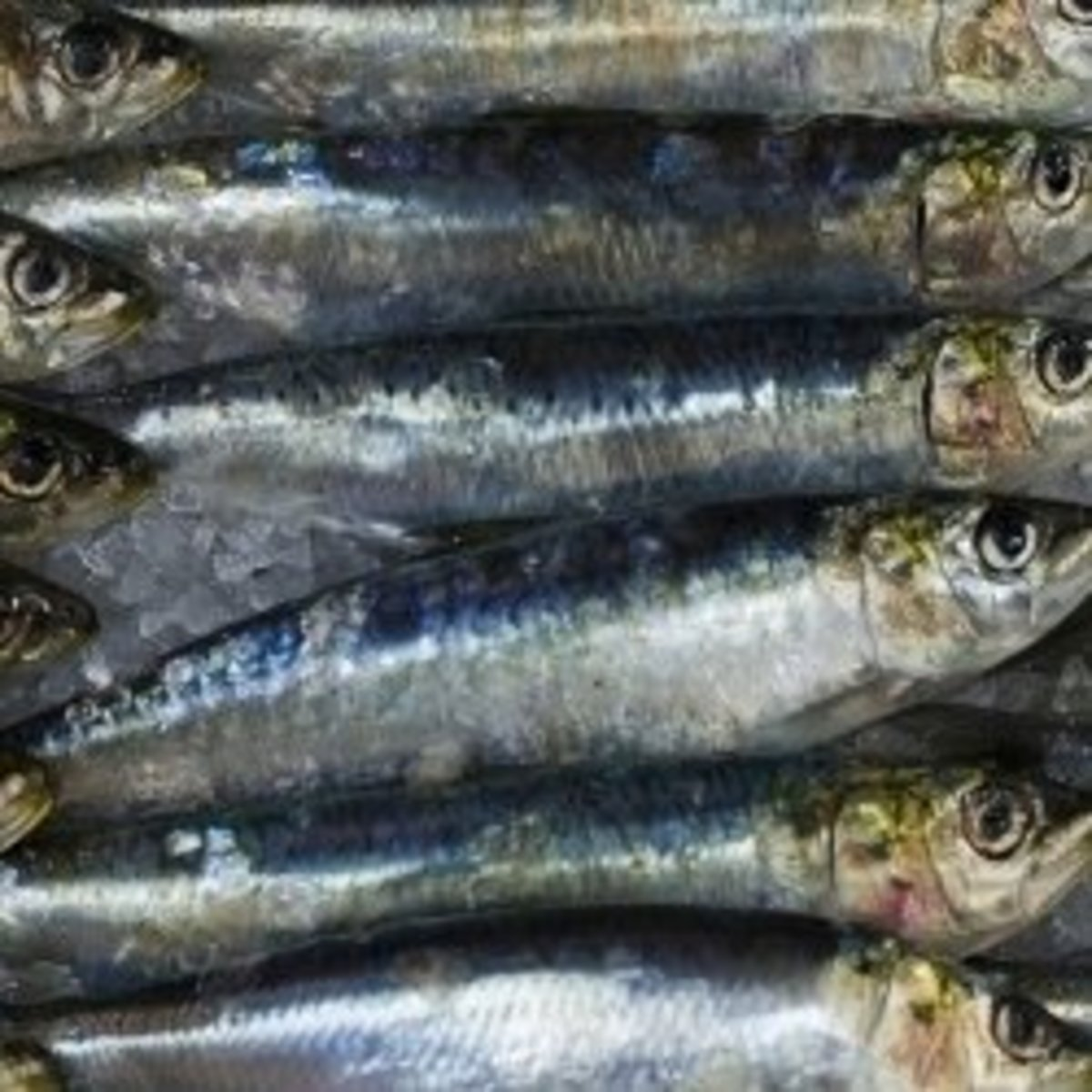 Delicious Canned Sardine Recipes