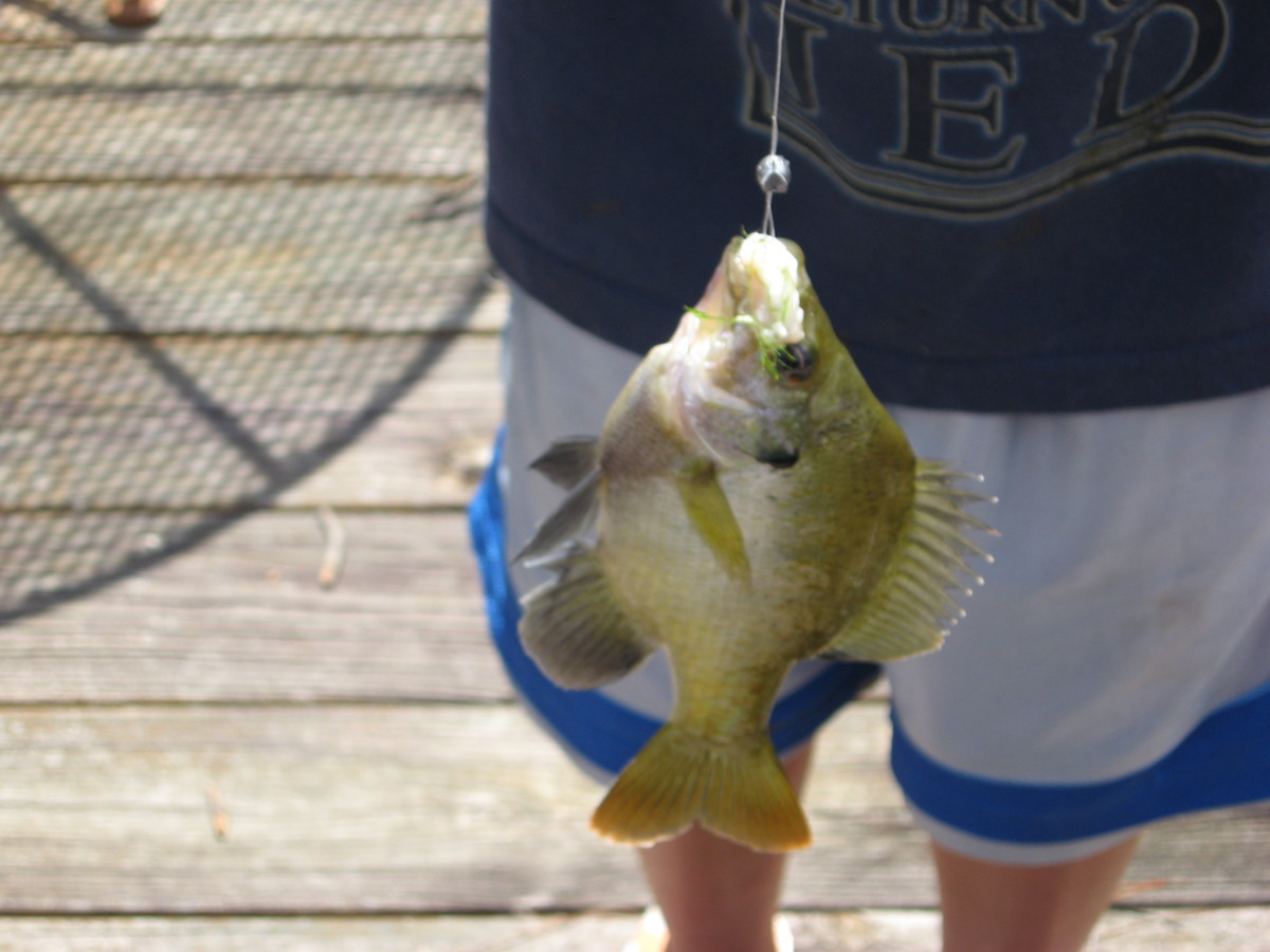 The little angler brings in another one.