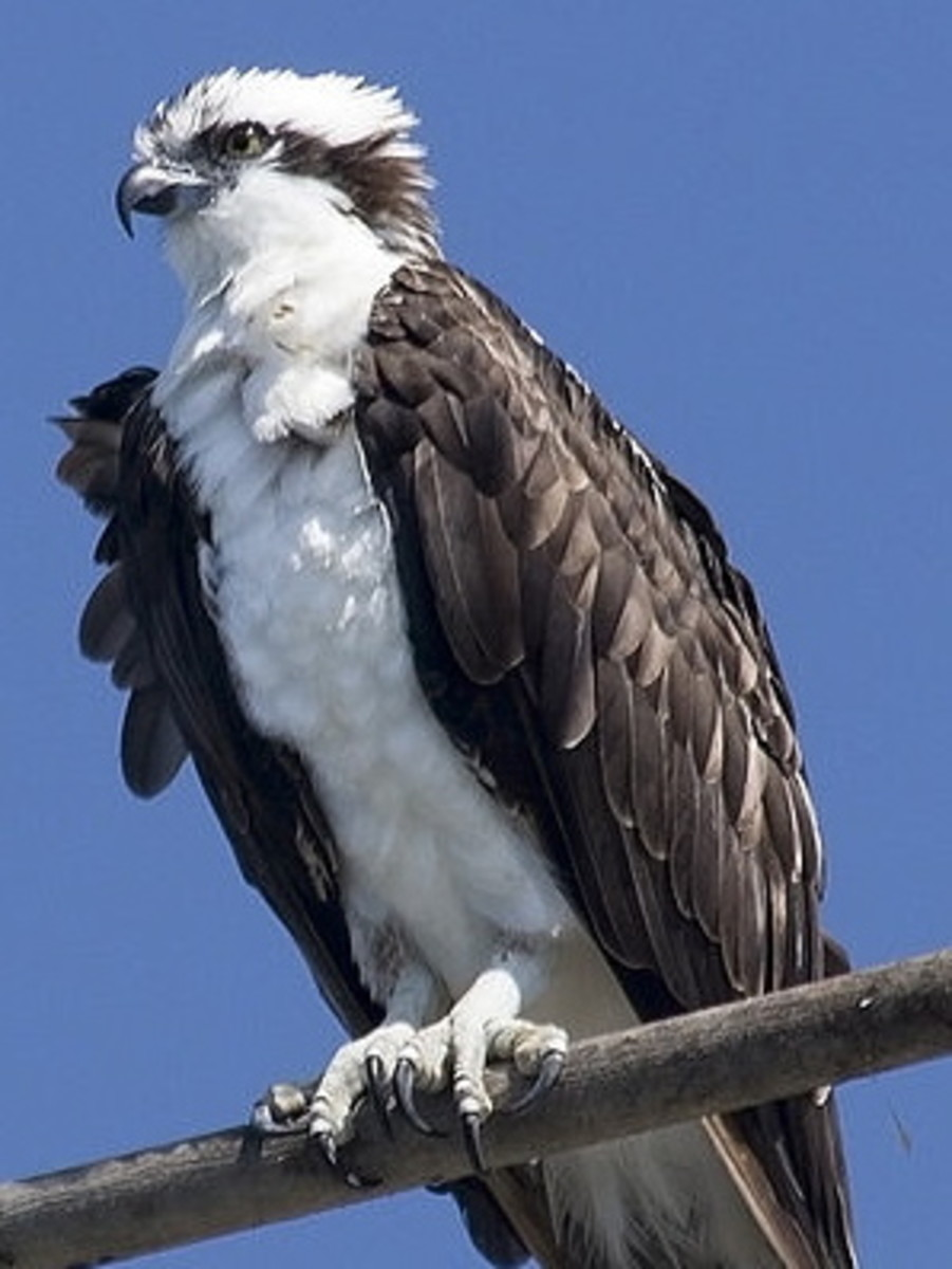 Notice the three talons in front while perched