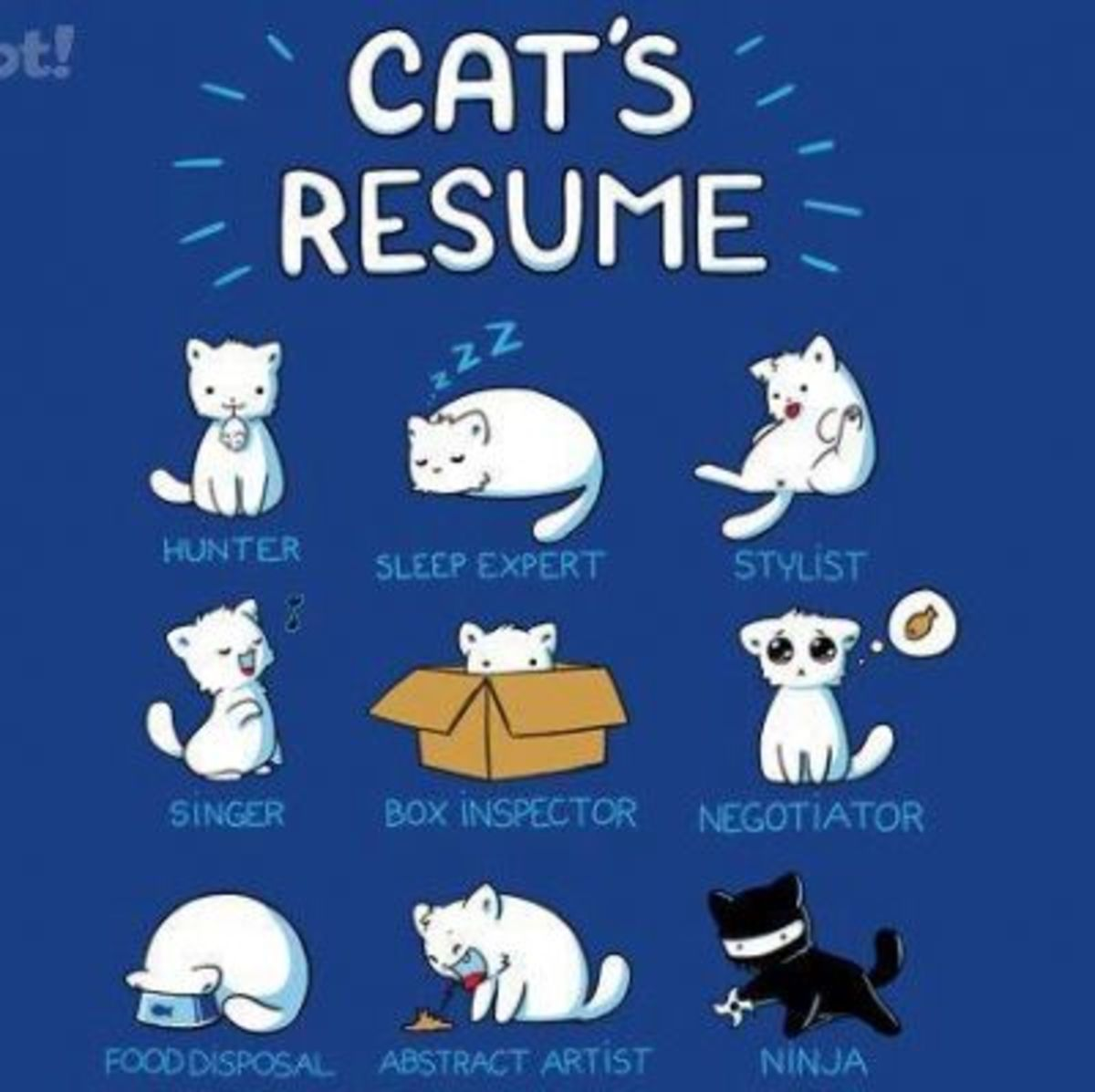 Kitty's Resume