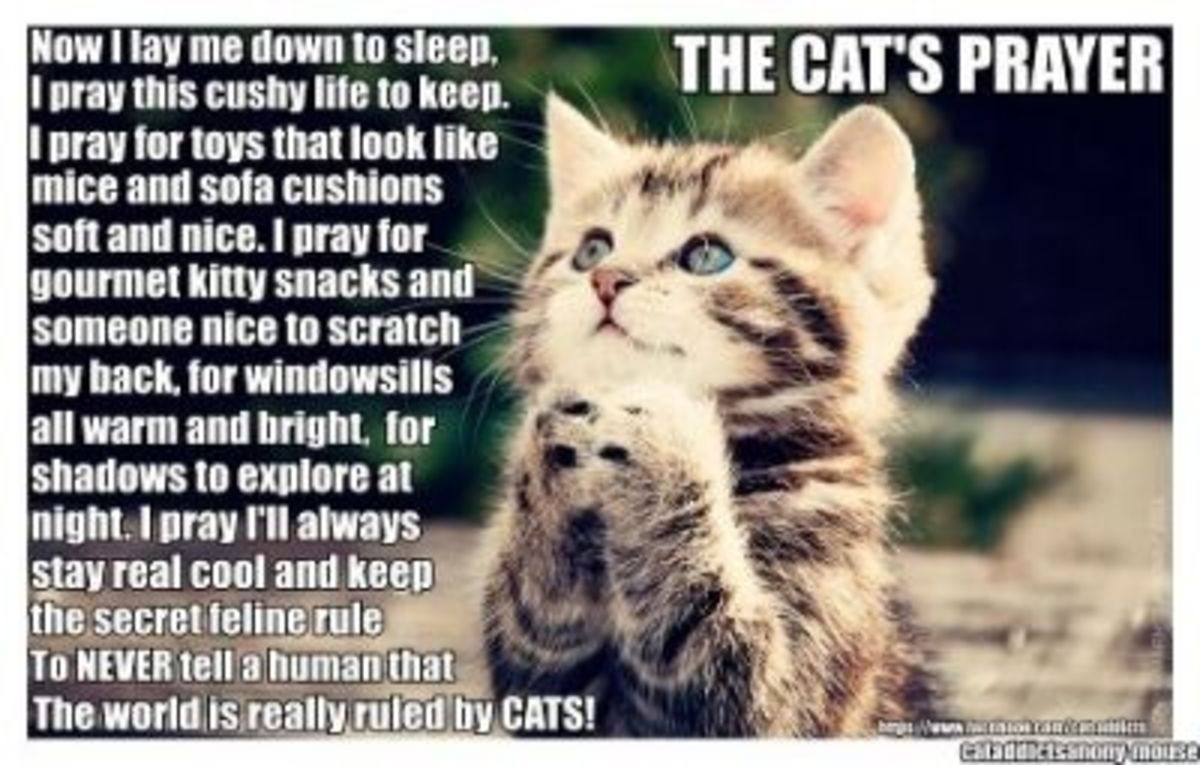 Cat's Prayer