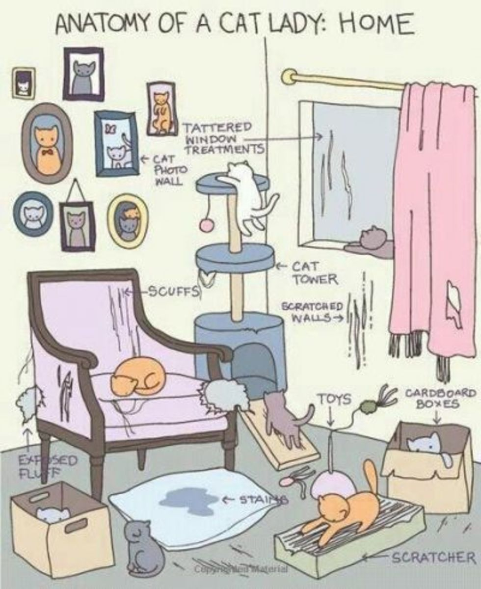 Cat Lady Home
