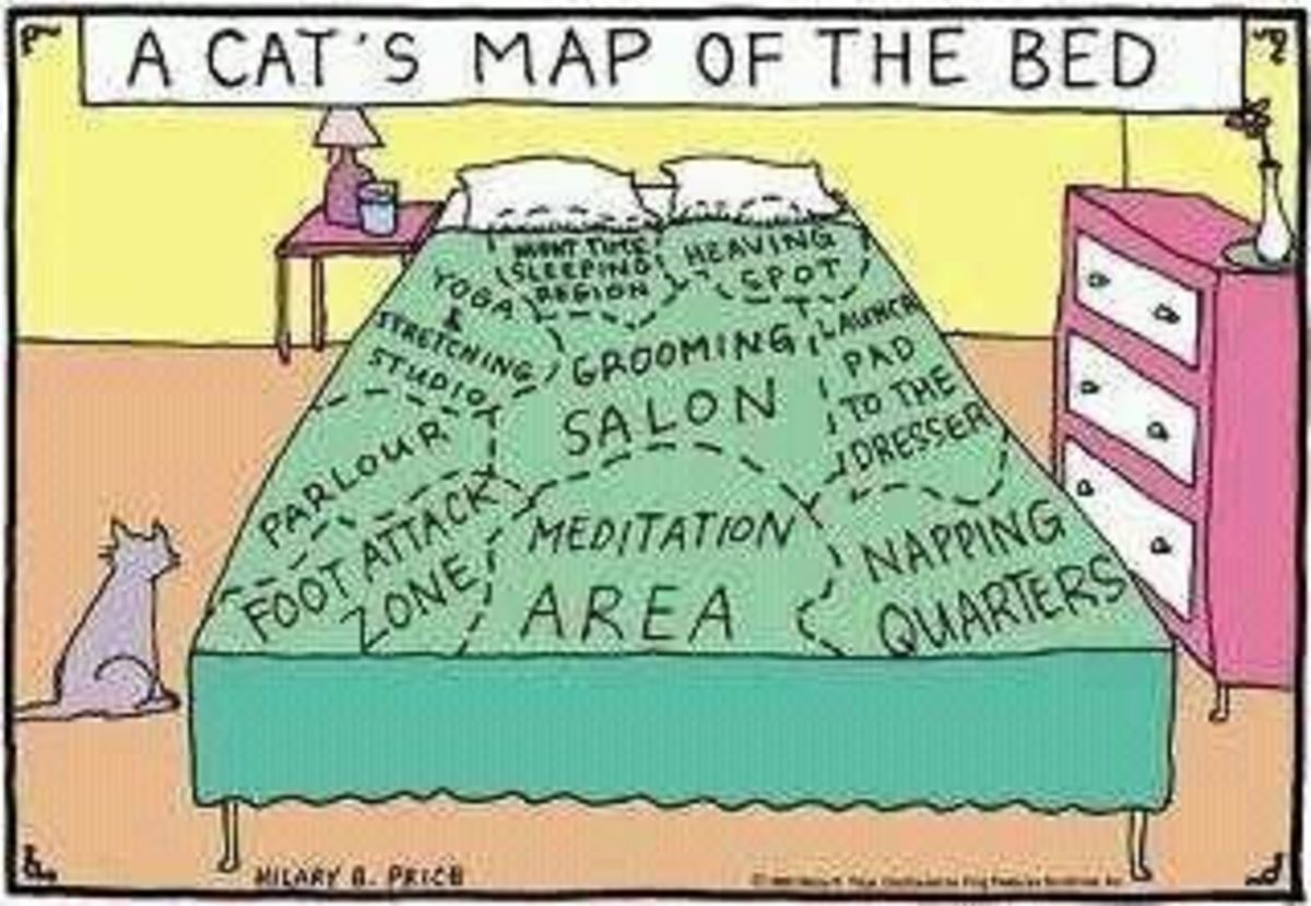 Bed Map