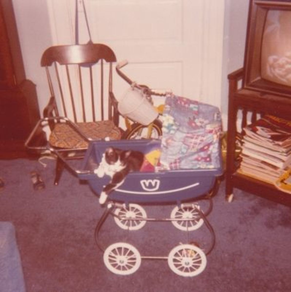 My Cat Tom R.I.P. when I was little