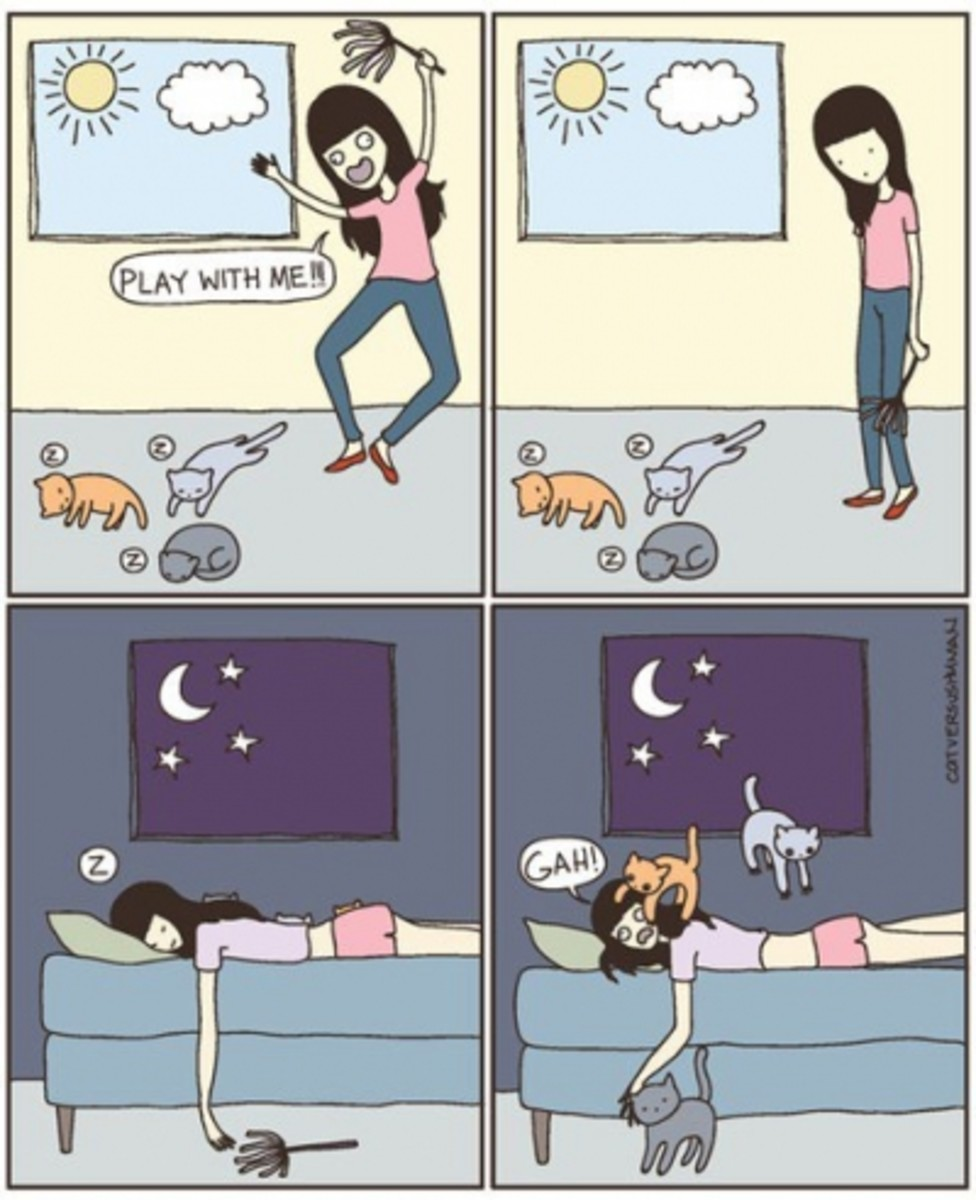 Day in the Life of a cat