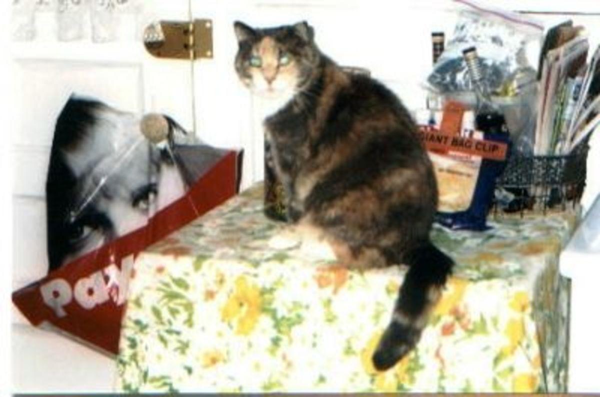 R.I.P. Tiffany July 5, 2002