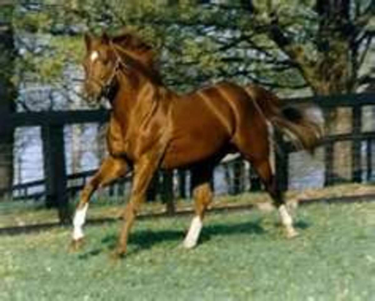 Secretariat:  Poetry In Motion