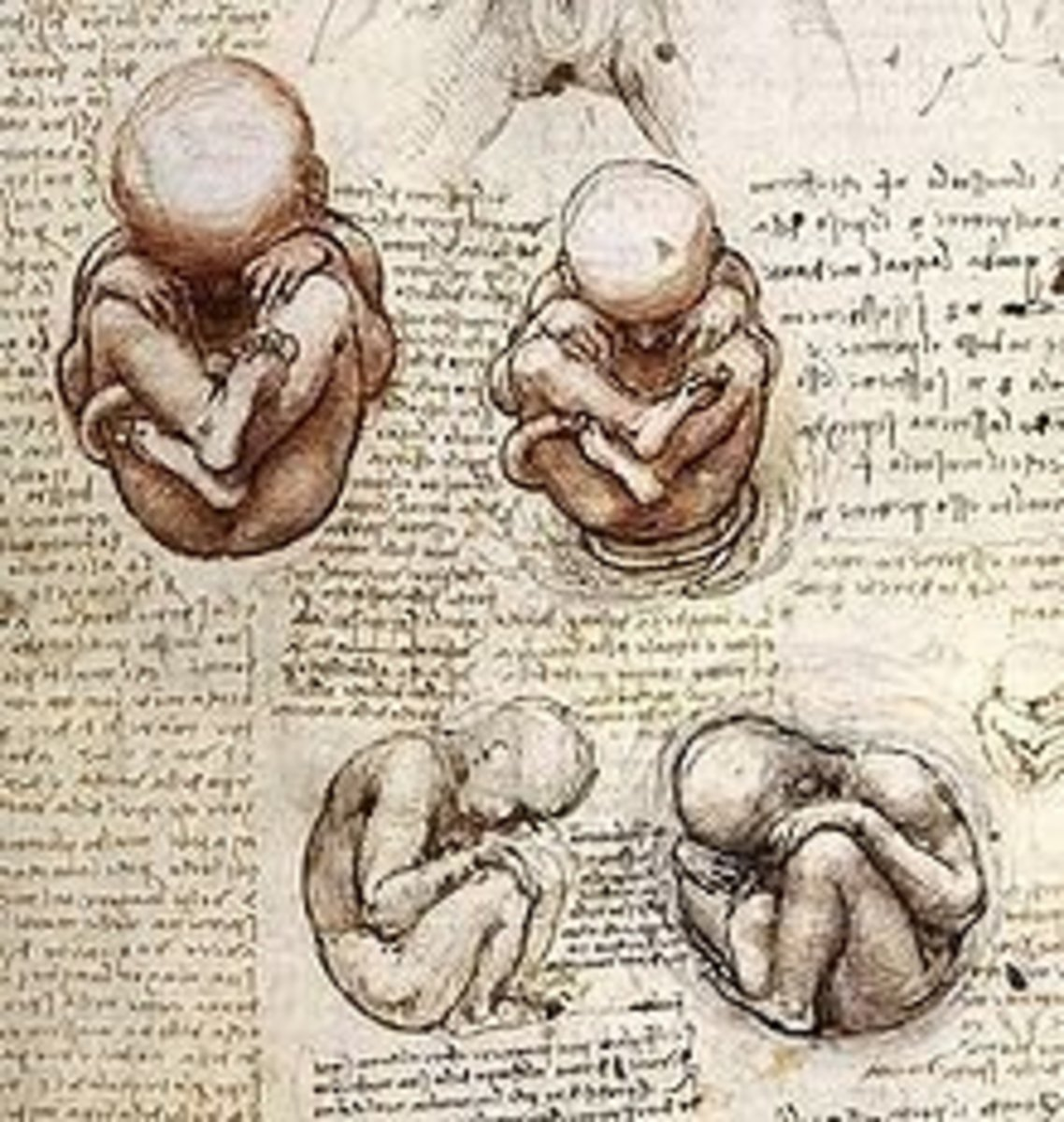 Obstetrics. He had detailed drawings of babies in all stages in utero along with the womb.
