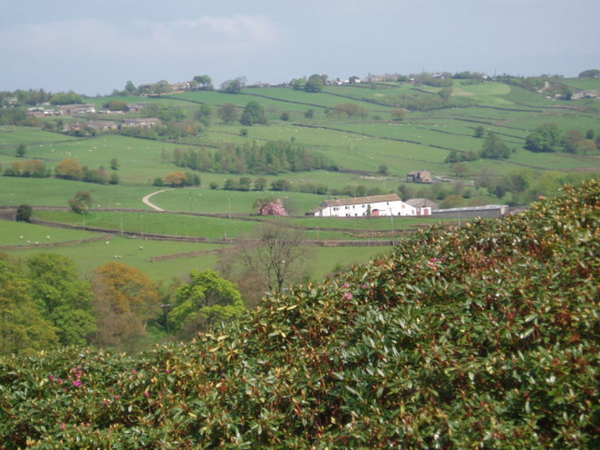 The Moors above Haworth