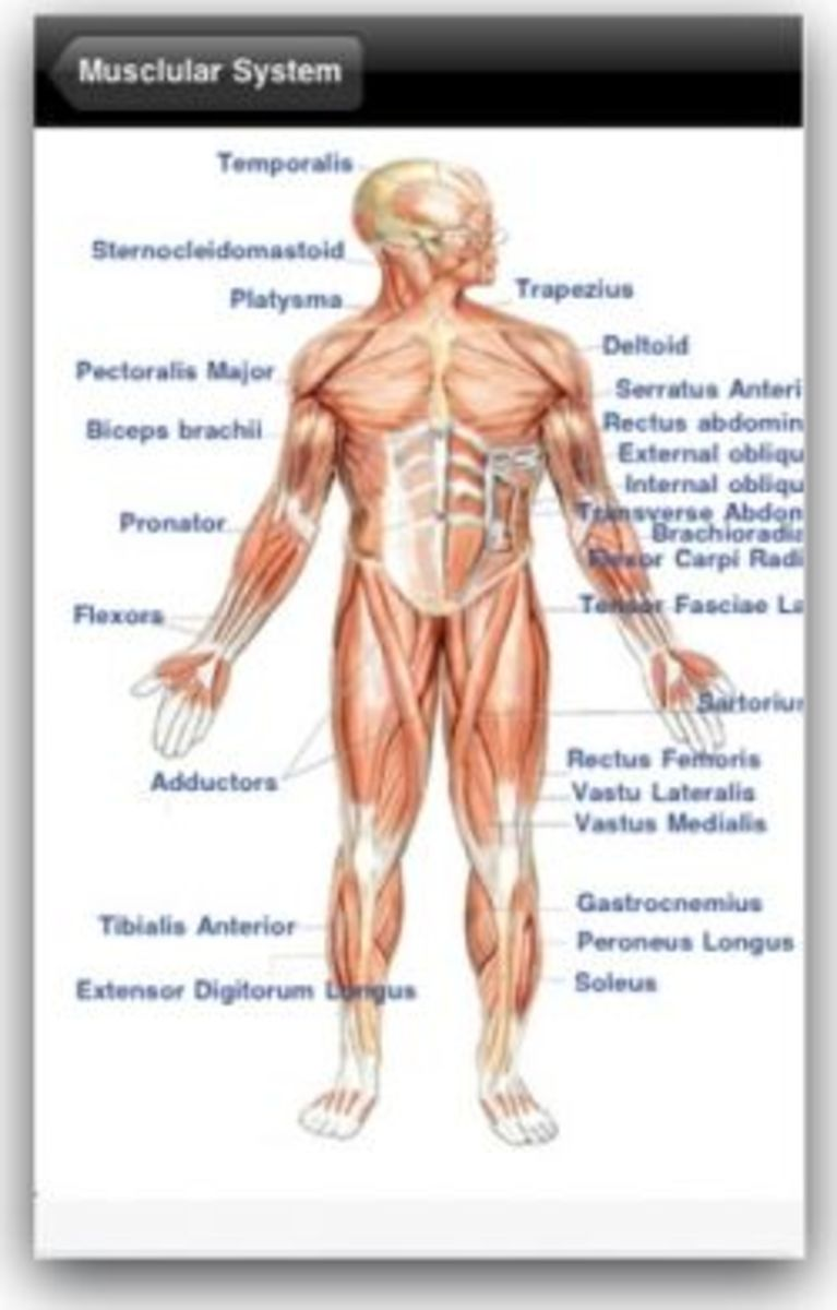 Human Anatomy Free app for iPhone, iPad