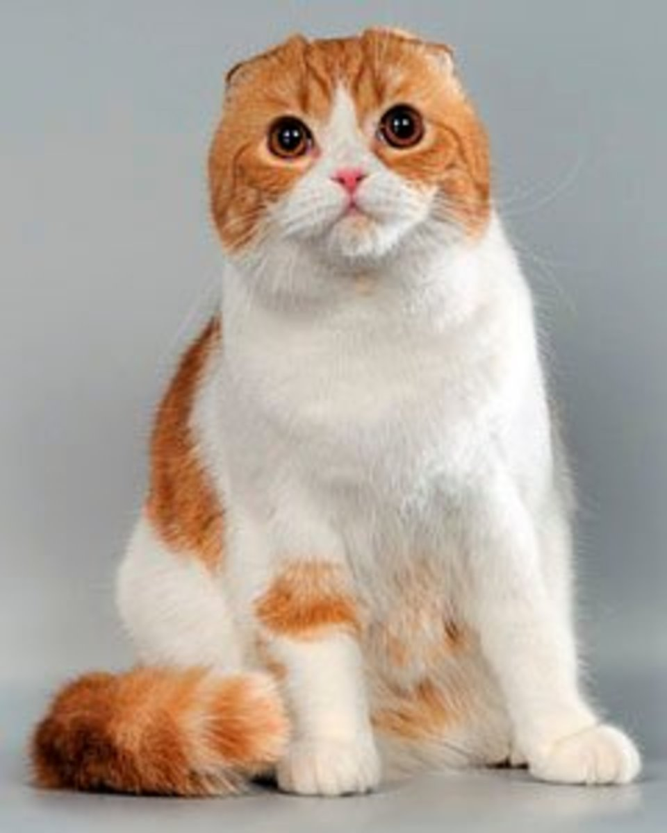 6 World's Weirdest Looking Cat Breeds