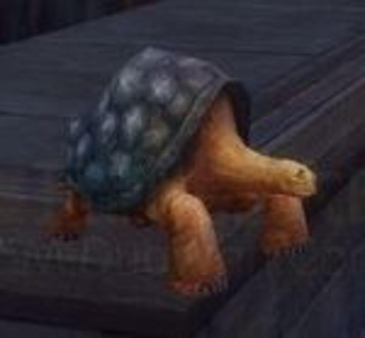 Millennium Turtle