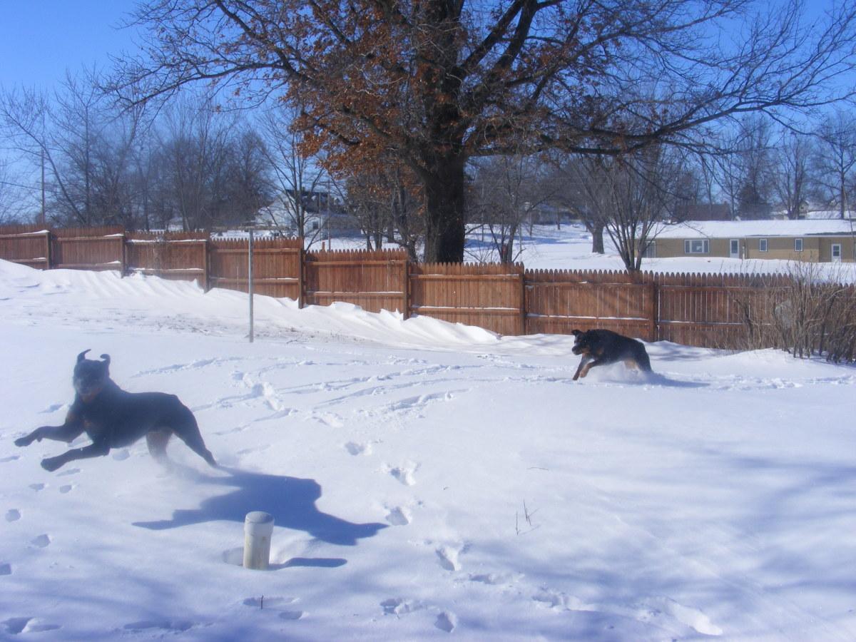 Understanding Dog Play Behaviors (Part One)