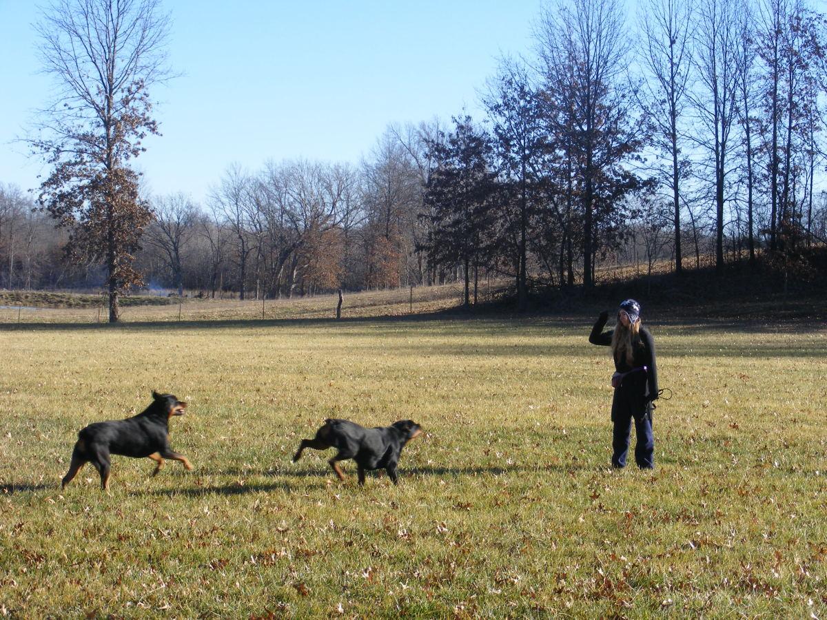 Dog Recall Training Tips