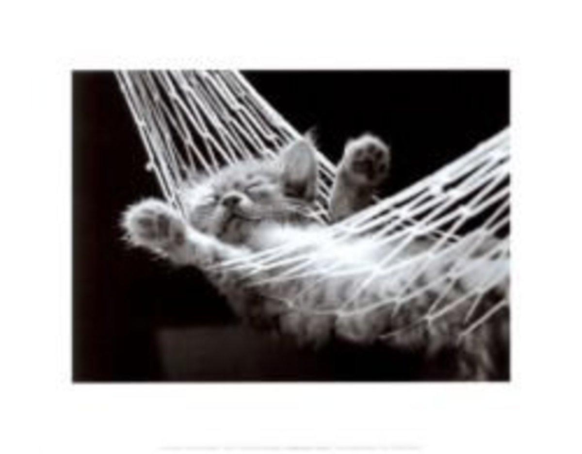 Cat Nap II