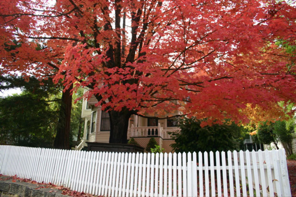 Top Cities in America for Fall Traveling