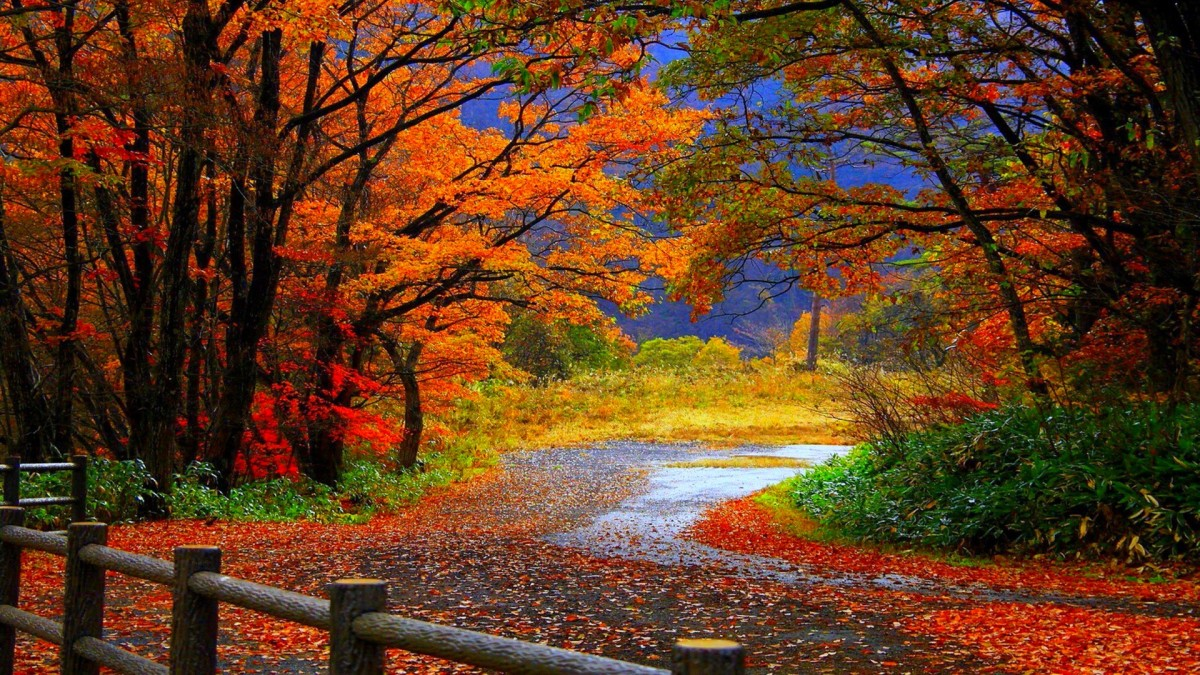 Fall Foliage Top Cities in America for Fall Traveling