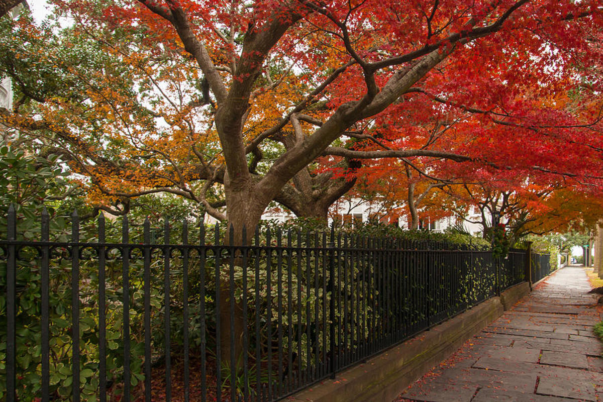 Charleston, South Carolina Top Cities in America for Fall Traveling