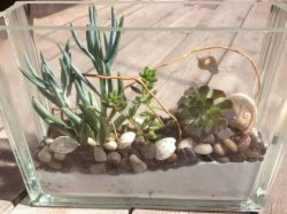 Succulents In Sand Glass Block Arrangement by Axis Mundi Artistry