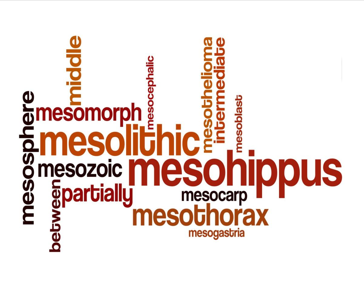 Meaning of Biology Prefix Meso-