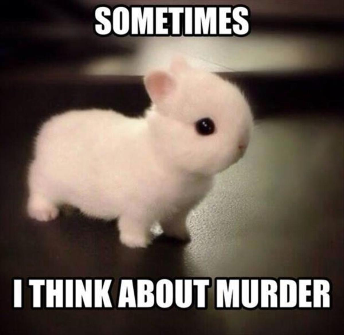 ....Bunnies have a lot of time on their paws!