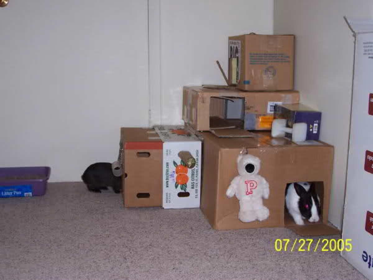 diy-bunny-toys