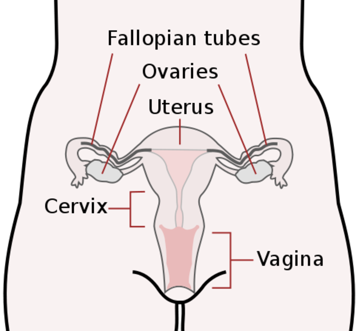 the-link-between-body-temperature-ovulation-and-pregnancy