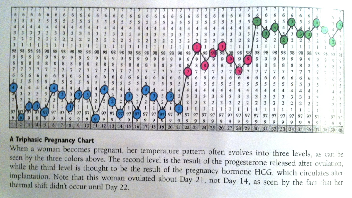 This chart shows the tri-phasic temperature pattern common with pregnancy. Blue temps indicate the follicular phase, Pink temps indicate ovulation and the luteal phase, and Green temps rise again due to the additional hormones that pregnancy creates.