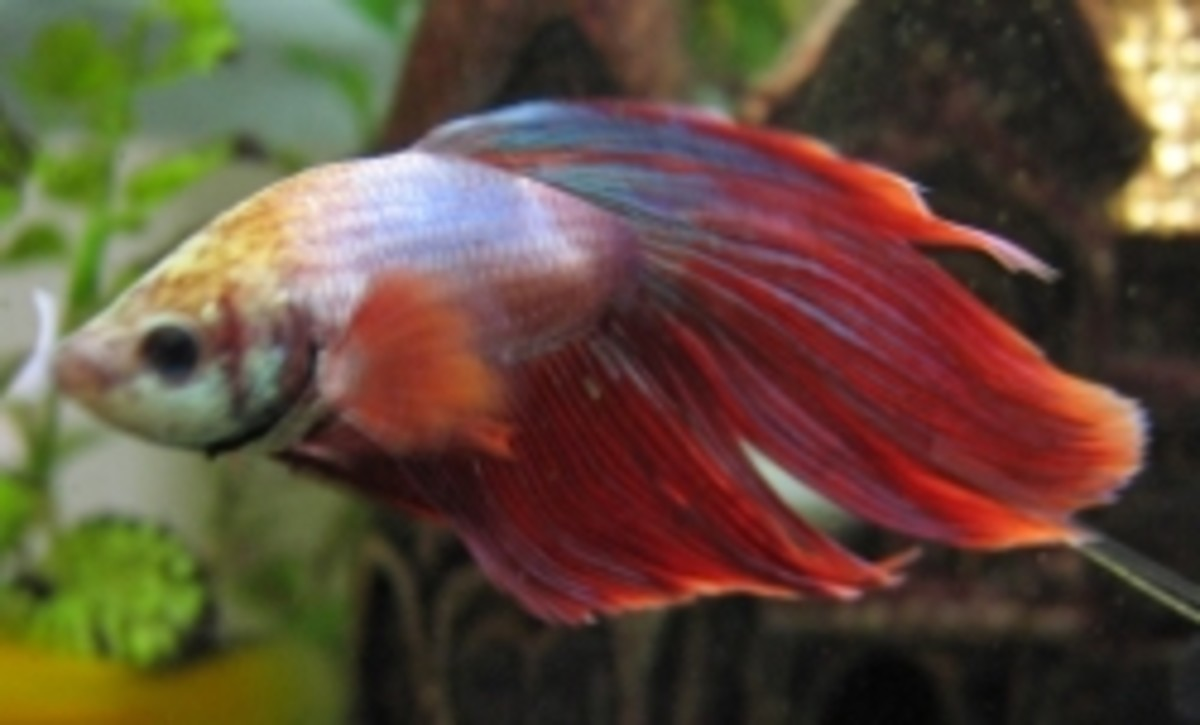 5 Good Betta Fish Tanks: Aquarium Reviews & Tips