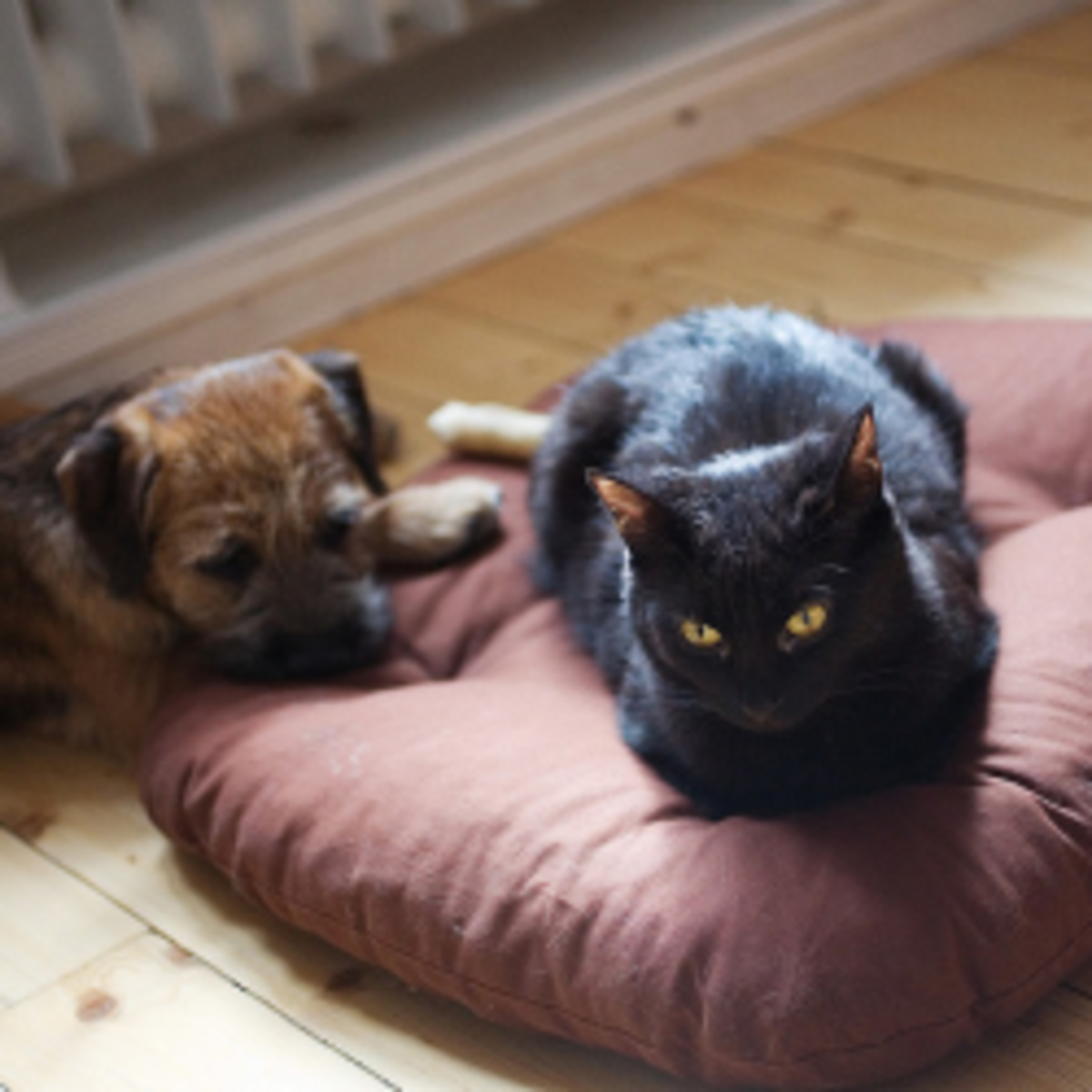 ★ DIY Dog Beds & Cat Toys | Homemade Pet Gifts and Fun Products ★