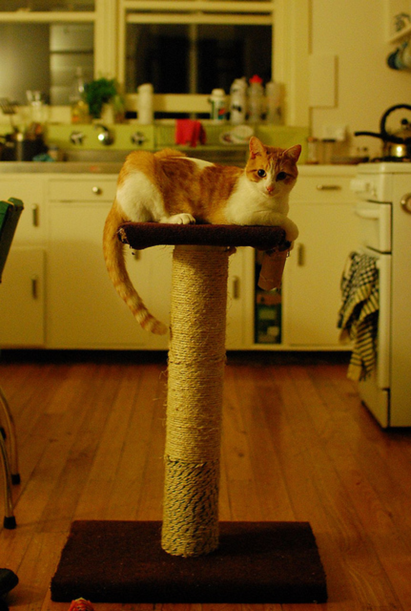 This cat scratching post was made using PVC pipe and 50 metres of rope