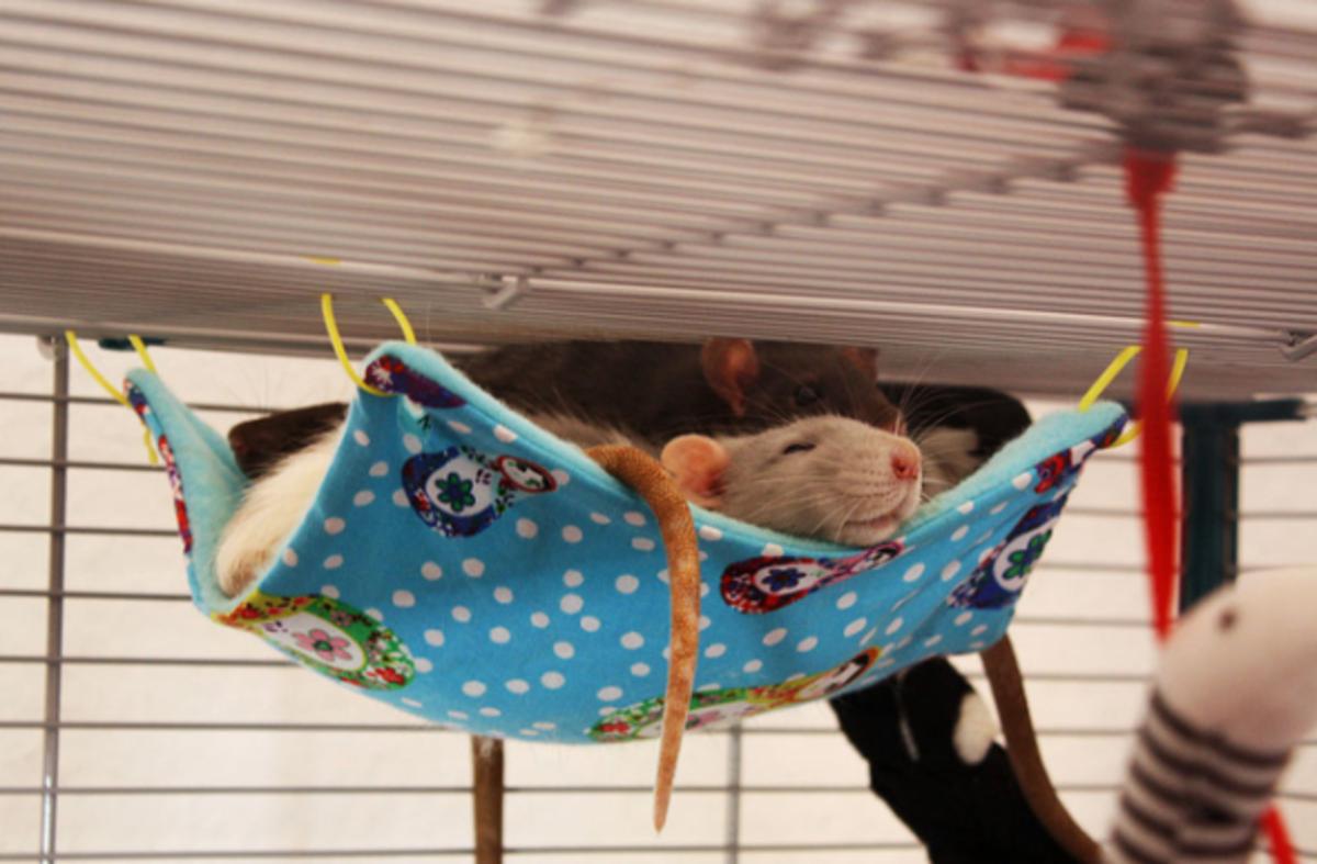 DIY Dog Beds & Cat Toys | Homemade Pet Gifts and Fun ...