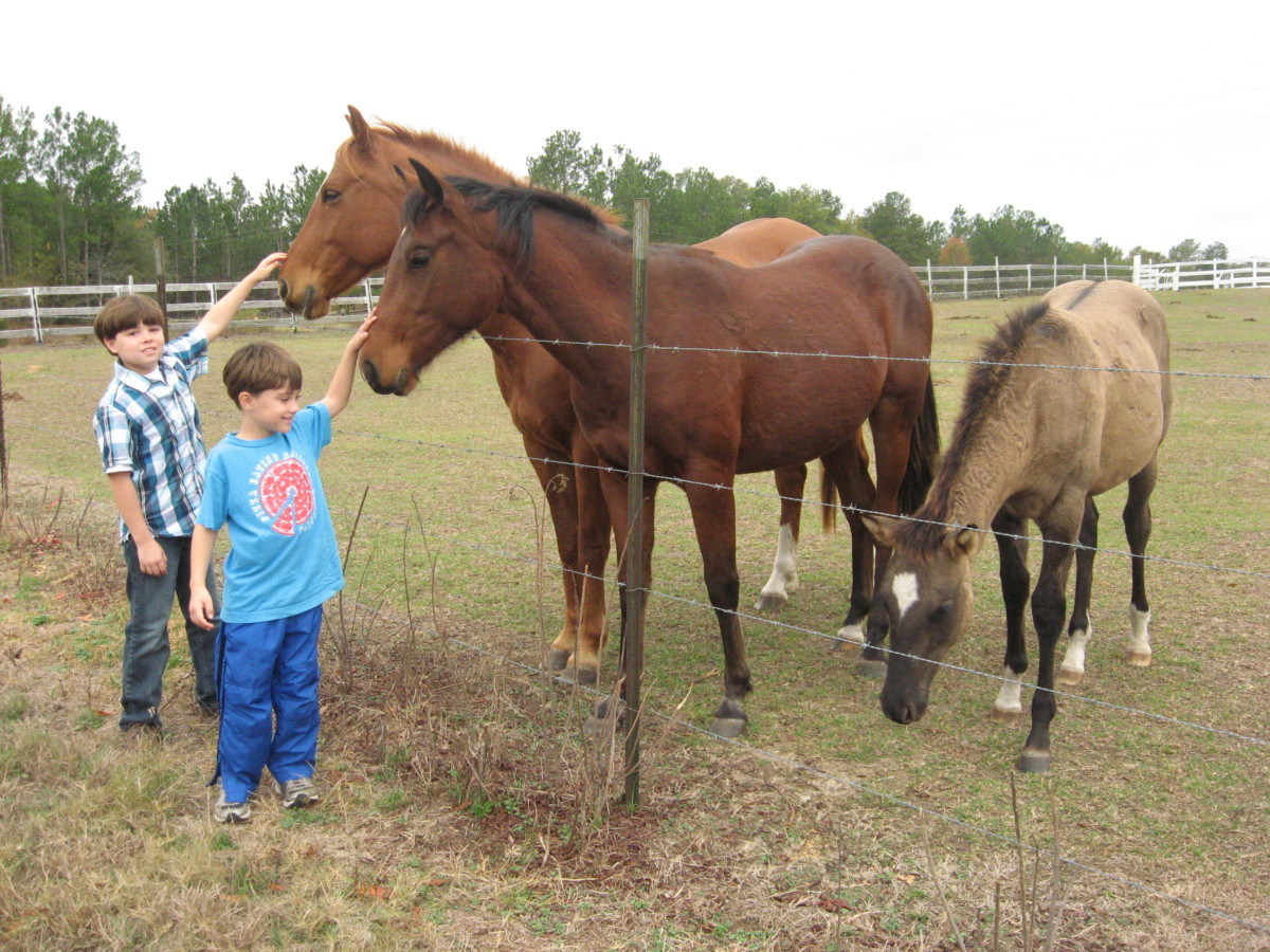 Jonathan and Tristan with horses