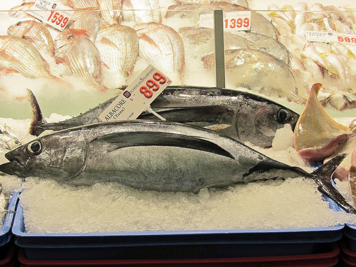 A whole fresh albacore tuna at the fish market