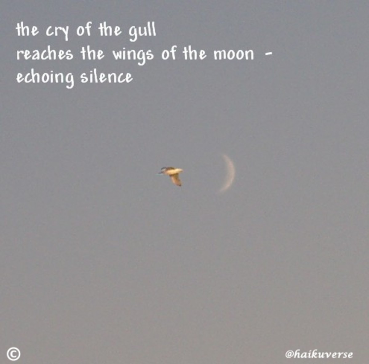 "Haiga by ""Dutch,"" used with permission"