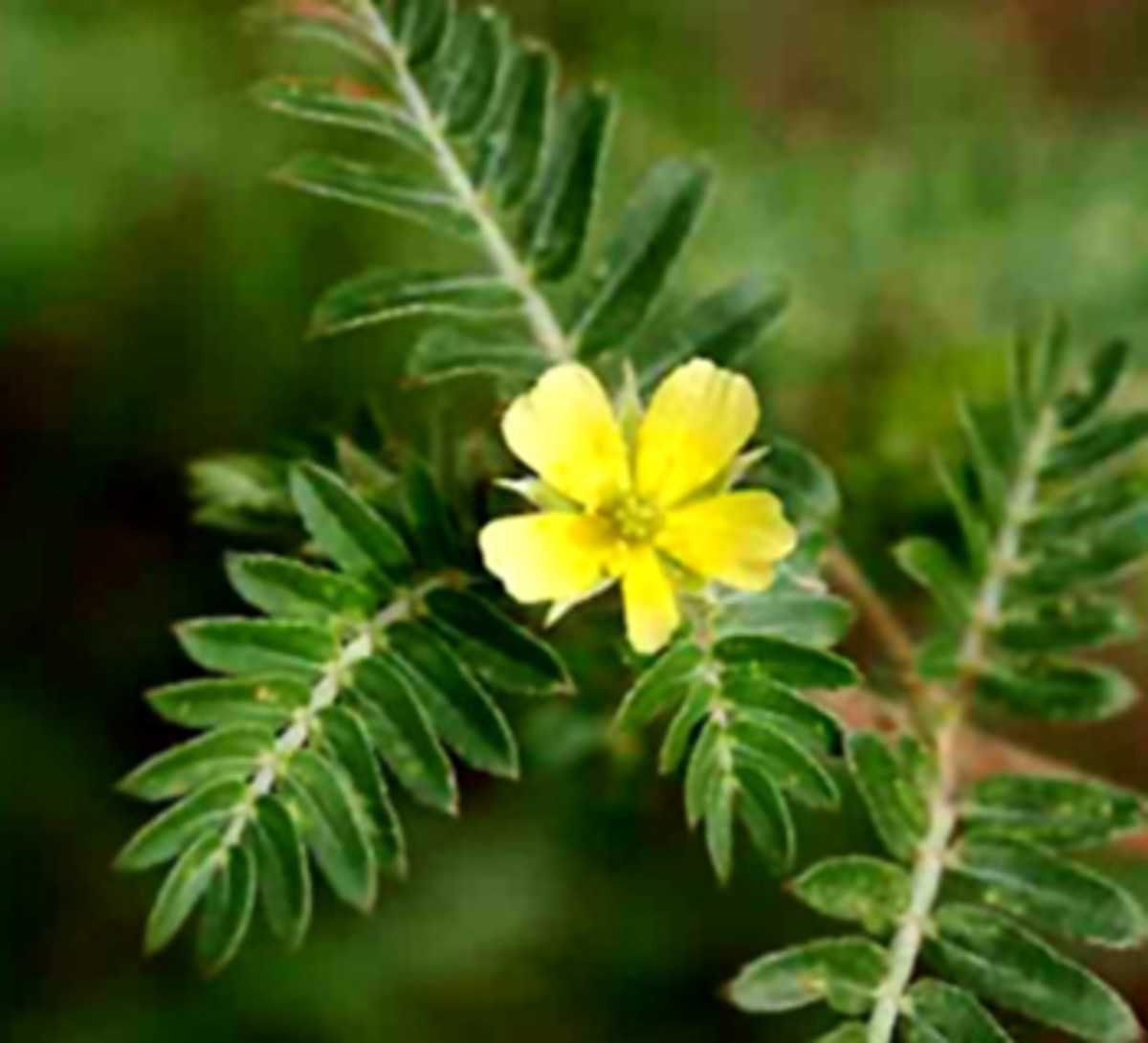 herbs-for-kidney-failure-and-dialysis