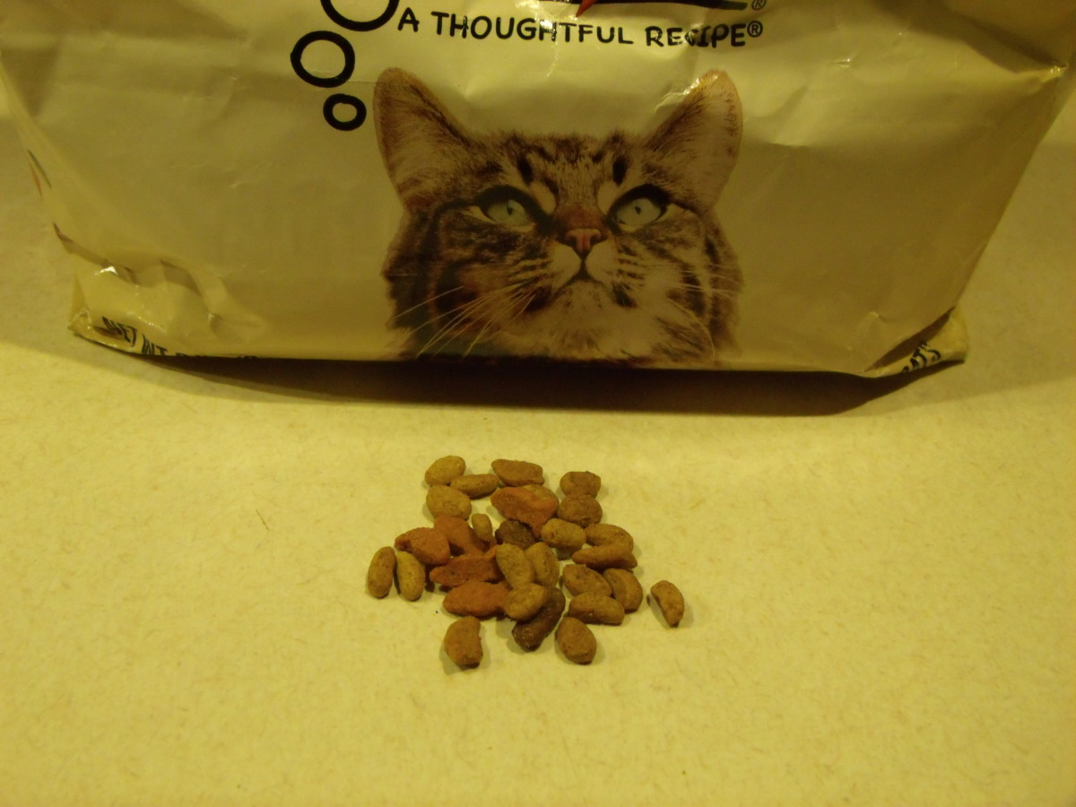 Just a few pieces of cat or dog food added to your bird seeds will give your feathered friends a protein-rich supplement.  Protein will help them in their battle with the elements.