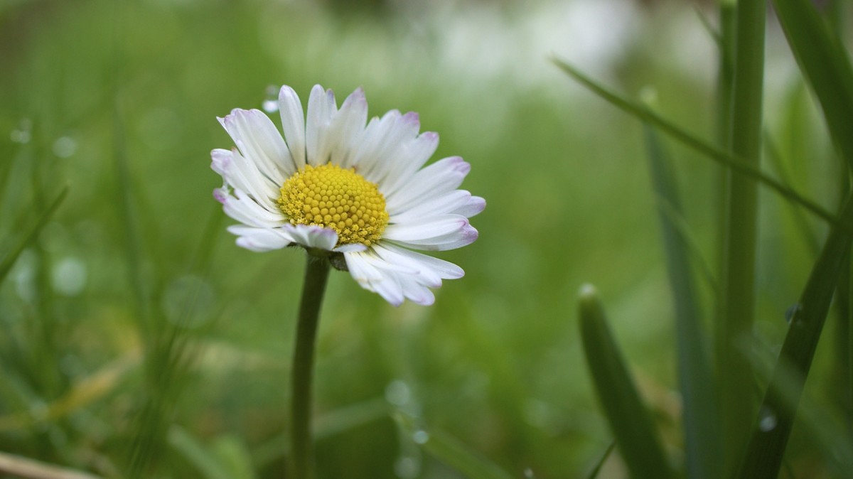 A single flower!