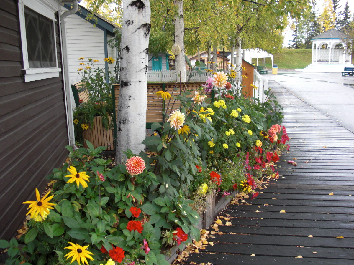 Alaskan flowers planted on a street inside Pioneer Park