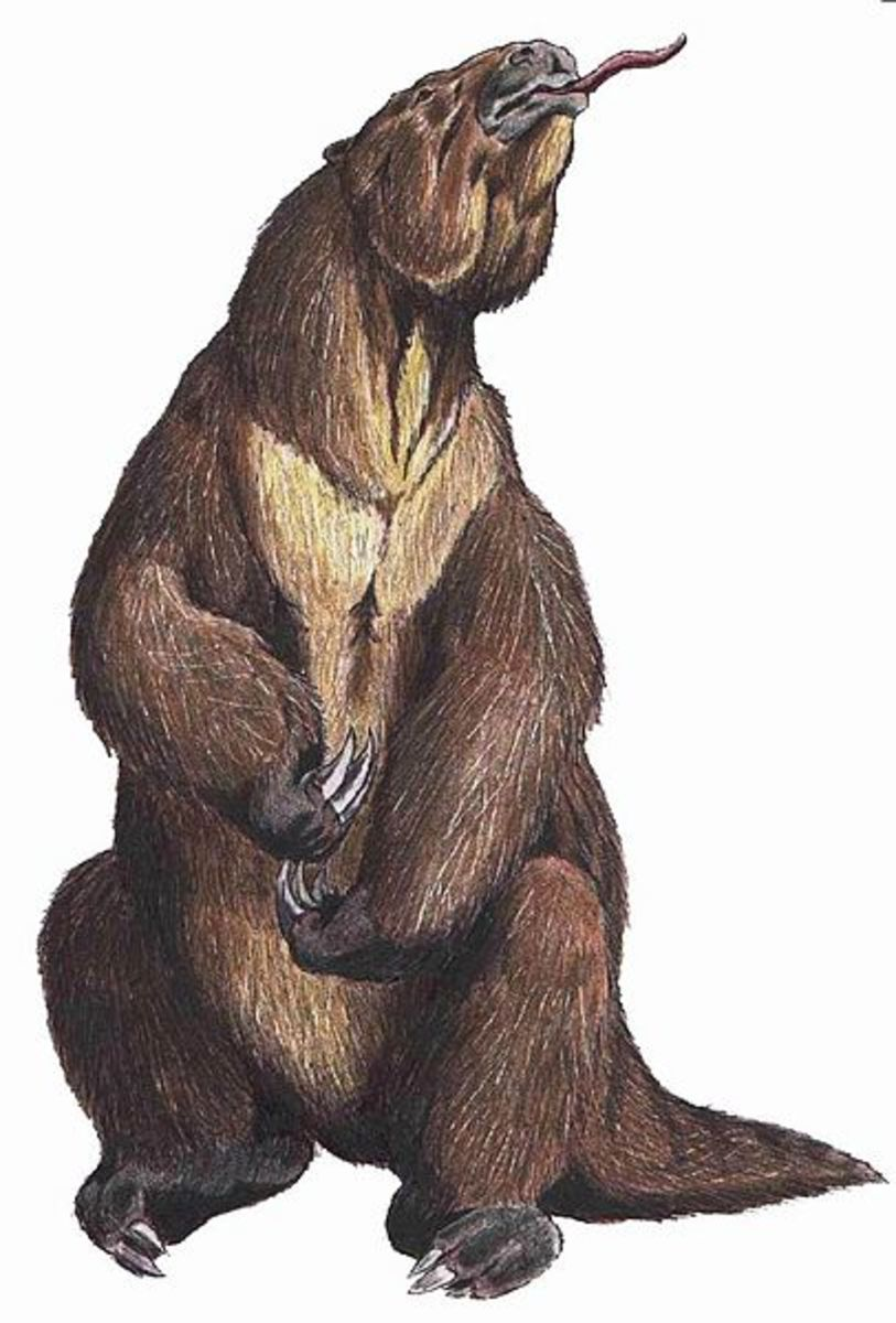 The power and size of the giant ground sloth megatherium mean that he faces no natural predators on the pampas.
