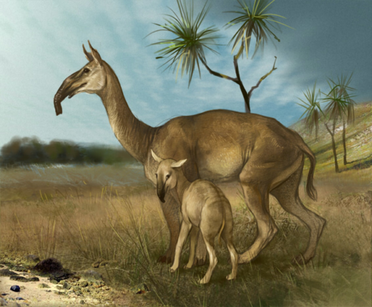 Despite being the size of modern camels, macrauchenia always have to be alert to danger. They are the favourite prey of the sabre-toothed smilodon.