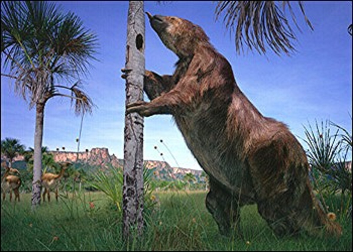 A giant megatherium watched in the distance by a herd of macrauchenia.