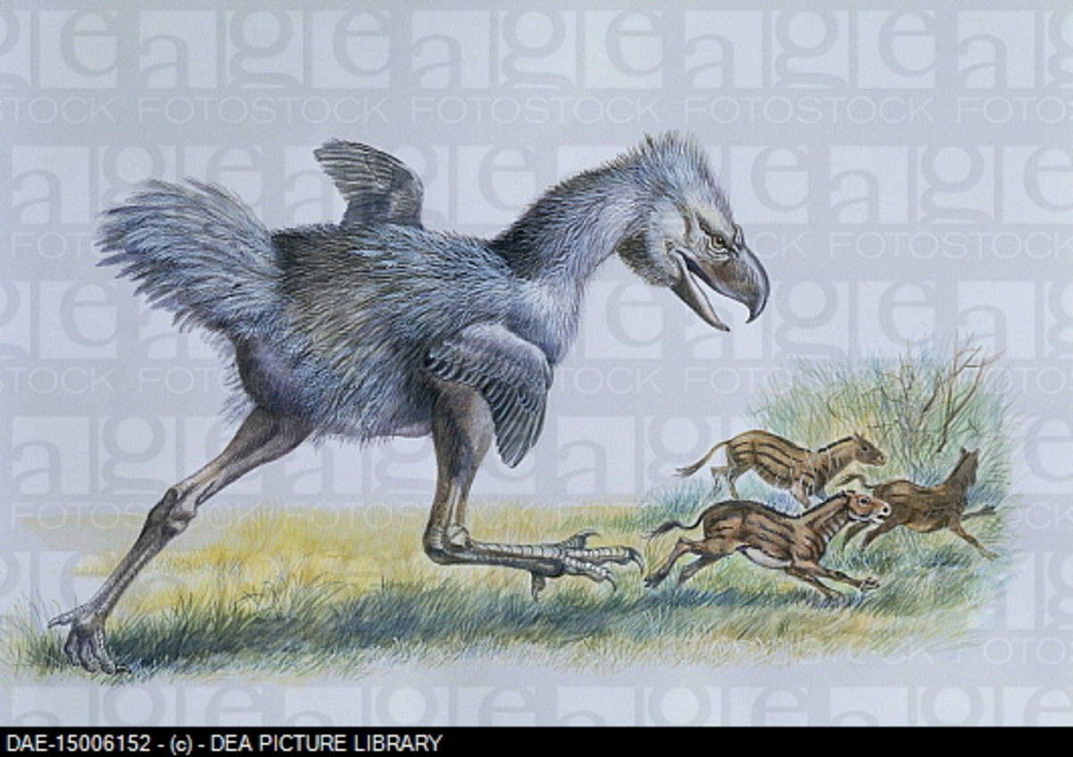 A phorusrhacos leaps out of cover to hunt the small horses while being watched by Half Tooth.