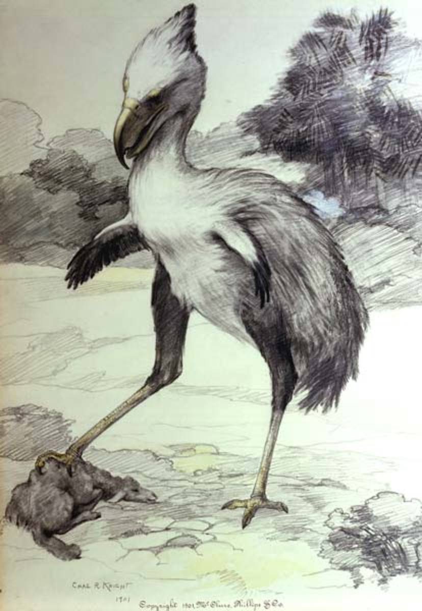 On the isolated continent of South America, flightless predatory birds thrived long after becoming extinct elsewhere.