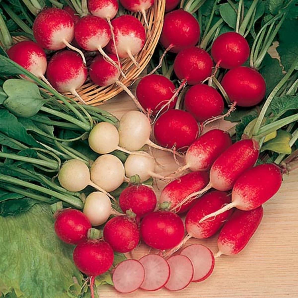 Radish red variety